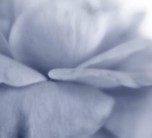 Roses are Blue by leapdaybride