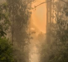 Follow The Light - Laurel Hill NSW - The HDR Experience by Philip Johnson