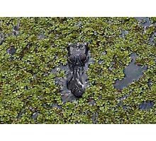 Crocodile Coming Photographic Print