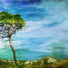 Where Wind In The Tree Blows by EvaMarIza