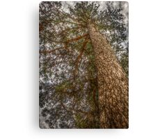Tree #6 HDR Canvas Print