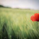 Flower in the field by lesslinear