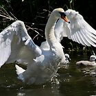Swan's Pride by James  Key