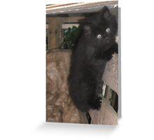 Kitten -(090613)- Digital photo/Fujifilm FinePix AX350 Greeting Card