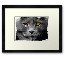 Cat with white background Framed Print