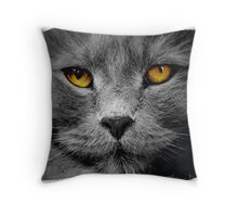 Cat with white background Throw Pillow