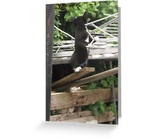 Kitten I -(090613)- Digital photo/Fujifilm FinePix AX350 Greeting Card