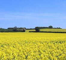 Worcestershire rape field by hjaynefoster
