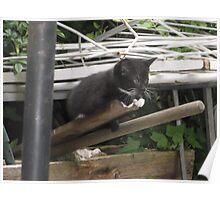 Kitten III -(090613)- Digital photo/Fujifilm FinePix AX350 Poster