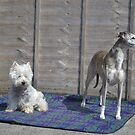 Meme and Me(Gracie Whippet) by Carla Maloco