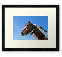 Brown Horse 1 Framed Print