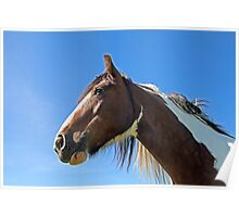 Brown Horse 1 Poster