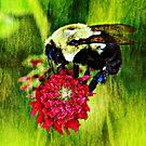 Bee II on Clover by Ginger  Barritt