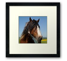 Brown Horse 2 Framed Print