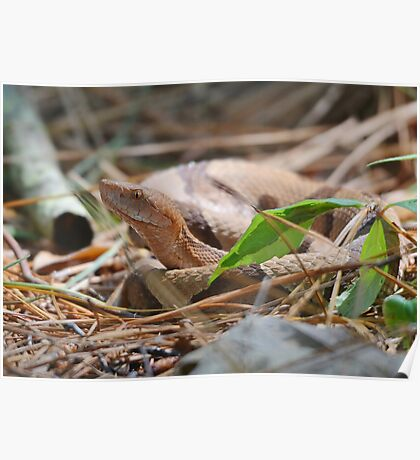 Sourthern Copperhead Poster