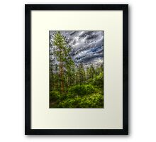 HDR Trees at Beulah Mountain Park Framed Print