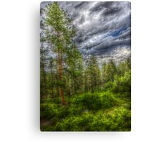 HDR Trees at Beulah Mountain Park Canvas Print