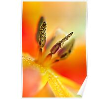 Parrot Tulip Heart Poster