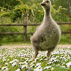 Young goose by Adam North
