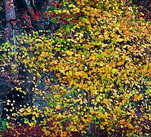 Autumn Leaves by Salwa Afef