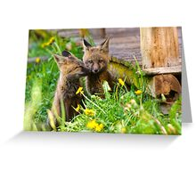 Foxes 297 Greeting Card