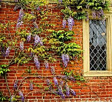Wisteria against brick wall by Karen  Betts