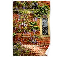 Wisteria against brick wall Poster