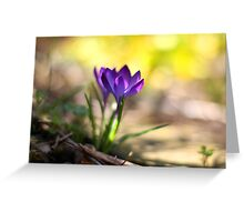Crocus growing in a crack in the path Greeting Card