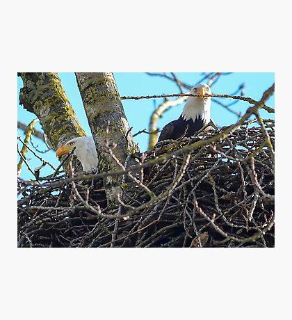 Mr,Mrs Eagle Photographic Print