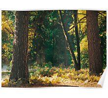 Autumn Morning, Yosemite NP Poster