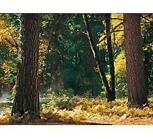 Autumn Morning, Yosemite NP Photographic Print