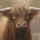 Highland Bull by Moonlake