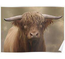 Highland Bull Poster