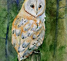 Barn owl by Redilion