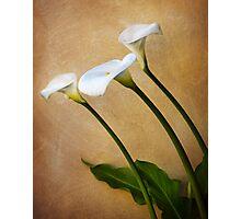 Cala Lily Trio Photographic Print
