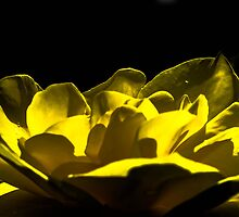 Unreal flower  by MaximussRi