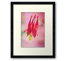 Queen Columbine Framed Print