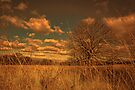 Watching from the tall grass by Jasna