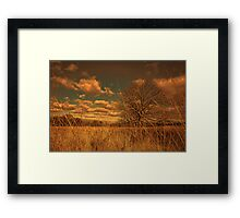 Watching from the tall grass Framed Print