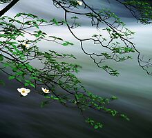 Dogwoods and Merced River by Edward Mendes
