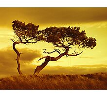 Tree Dance Photographic Print