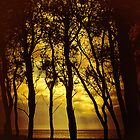 Light Through the Trees by David Harnetty