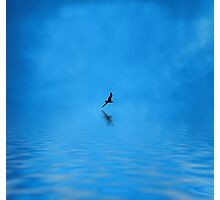 Blue Water Flying Photographic Print