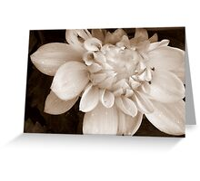 SUBDUED BEAUTY Greeting Card