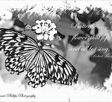 Butterfly Beauty by Bonnie Phillips