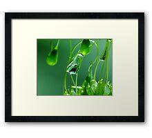 H20 Macro - Moss Framed Print
