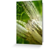 Spider's Eyes Greeting Card