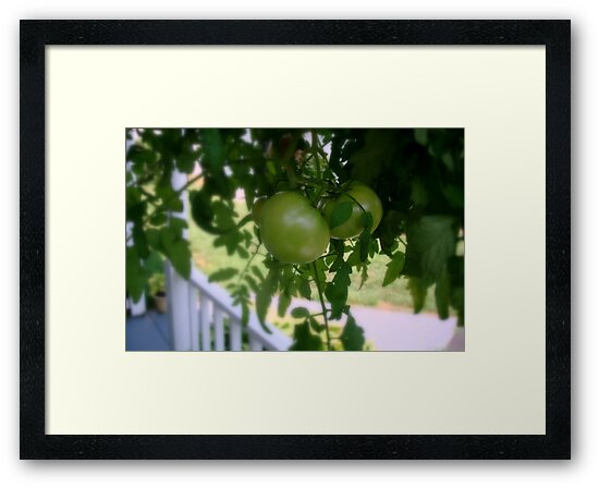 Green Tomatoes     ^ by ctheworld