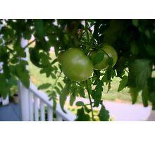 Green Tomatoes     ^ Photographic Print