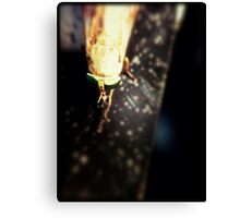 Bug Looking Fly Canvas Print